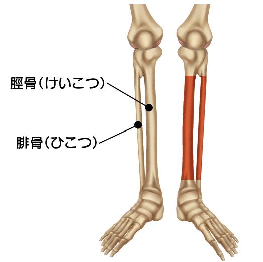 【競艇アクシデント】大峯豊選手がレース中の事故で折った腓骨骨幹部骨折とは ボートレース徳山・競艇選手